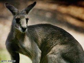 Art.kangaroo