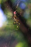Spider.1